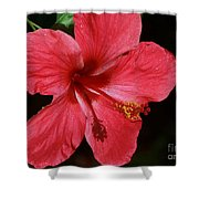 Tropical Beauty Of Florida Shower Curtain