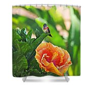 Tropical Hummer Shower Curtain