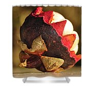 Tropical Mangosteen - The Medicinal Fruit Shower Curtain by Kaye Menner