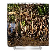 Tropical Mangroves Shower Curtain