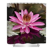 Tropical Night Flowering Water Lily  Rose De Noche IIi Shower Curtain