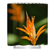 Tropical Orange Heliconia Flower Shower Curtain
