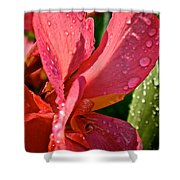 Tropical Rose Canna Lily Shower Curtain