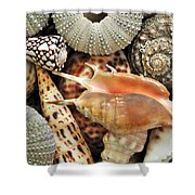 Tropical Shells Shower Curtain