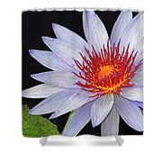 Tropical Waterlily Shower Curtain