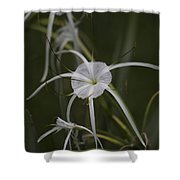 Tropical White Spider Lily Shower Curtain
