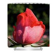 Tropicana Pink  Shower Curtain