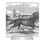 Trotting Horses, 1854 Shower Curtain