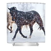 Trotting In The Snow Shower Curtain