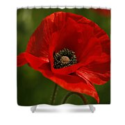 Truly Red Oriental Poppy Wildflower Shower Curtain