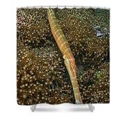 Trumpet Fish, Lembeh Strait, Bitung Shower Curtain by Mathieu Meur