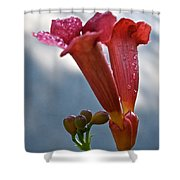 Trumpet Vine Floral Shower Curtain
