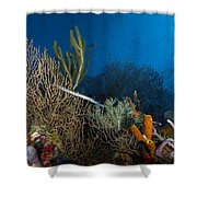 Trumpetfish, Belize Shower Curtain