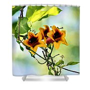 Trumpeting Spring Shower Curtain
