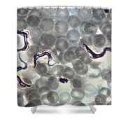 Trypanosoma Gambiense Shower Curtain