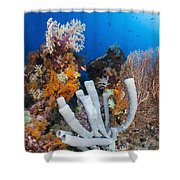 Tube Sponge On Coral Reef In Raja Shower Curtain