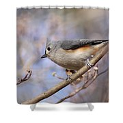 Tufted Titmouse - On The Slope Shower Curtain