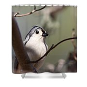 Tufted Titmouse - The Bomb Shower Curtain