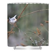 Tufted Titmouse 2 Shower Curtain
