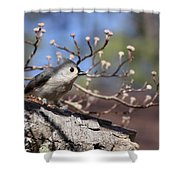 Tufted Titmouse - Bird - Color In Shadows Shower Curtain