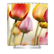 Tulip - Impressions 1 Shower Curtain
