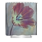 Tulip Adventure Shower Curtain