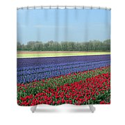 Tulip And Hyacinth Fields In Holland. Panorama Shower Curtain