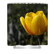 Tulip Drops Shower Curtain