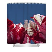 Tulip Estella Reinfeld Shower Curtain
