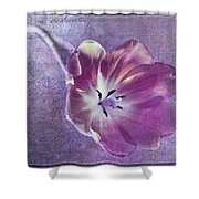 Tulip Fancy Shower Curtain