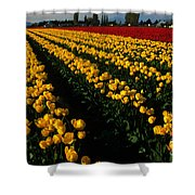 Tulip Fields Forever Shower Curtain