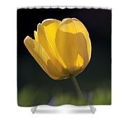 Tulip Flower Series 1 Shower Curtain