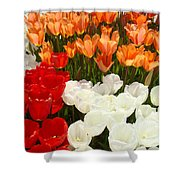 Tulip Flowers Festival Art Prints Floral Baslee Shower Curtain