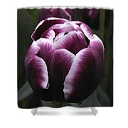 Tulip Gavota Shower Curtain