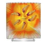 Tulip Interior Shower Curtain