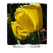Tulip Named Big Smile Shower Curtain