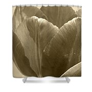 Tulip Named Passionale Shower Curtain