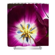Tulip Overture Shower Curtain