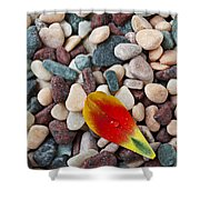 Tulip Petal And Wet Stones Shower Curtain