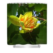 Tulip Poplar Flower Shower Curtain