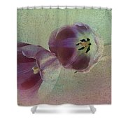 Tulip Reflections Shower Curtain