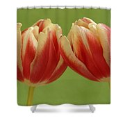 Tulip Tulipa Sp Pair, Hoogeloon Shower Curtain