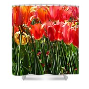 Tulip Uprising Shower Curtain