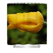 Tulip With Raindrops 2 Shower Curtain