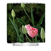Tulips And Evergreen Shower Curtain