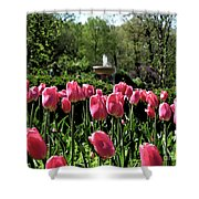 Tulips And Fountain Shower Curtain