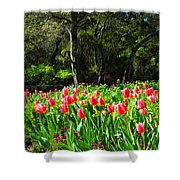 Tulips And Woods Shower Curtain