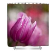 Tulips Impression Shower Curtain
