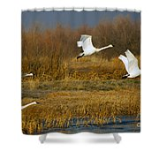 Tundra Flight Shower Curtain