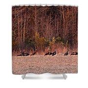 Turkey - Wild Turkey - Seventeen Longbeards Shower Curtain